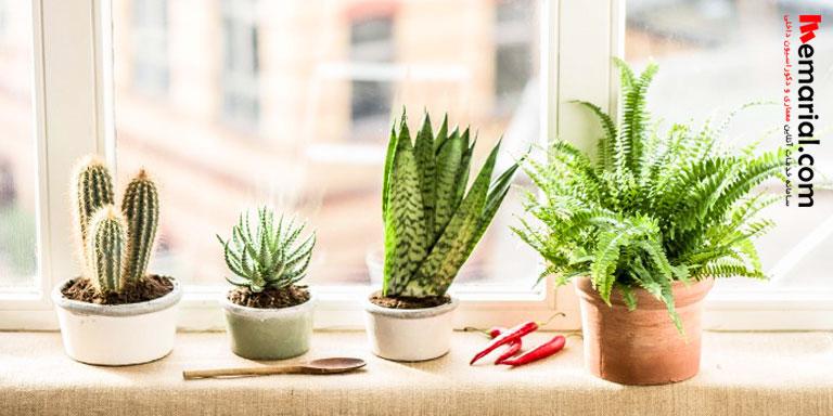 گل و گیاه در آشپزخانه